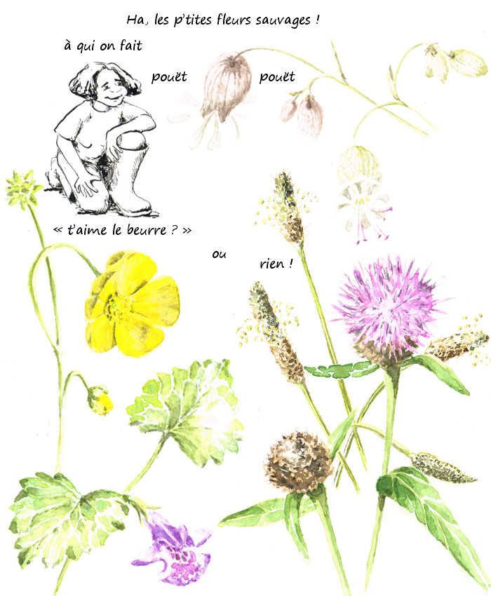 Petites fleurs sauvages