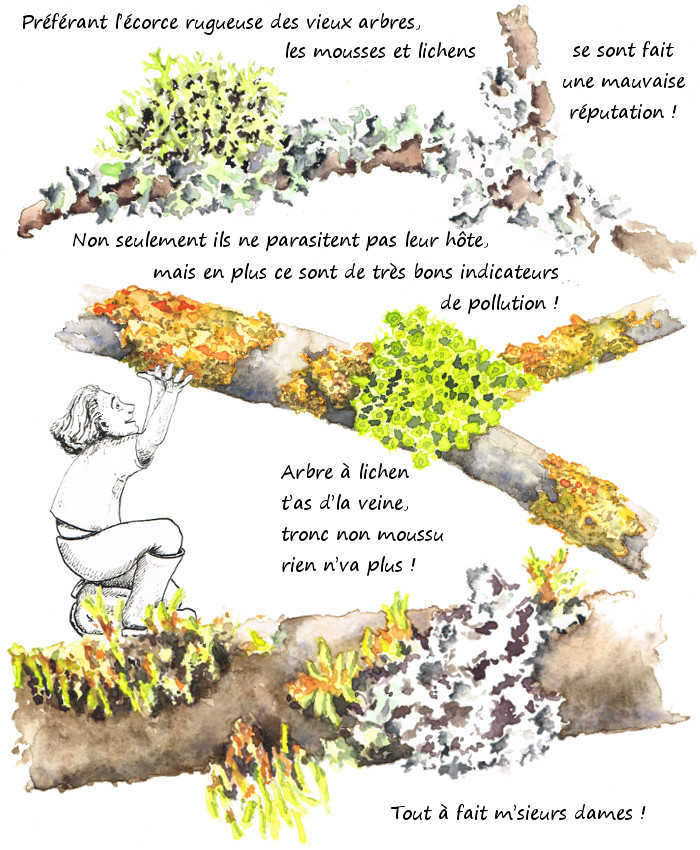 Les mousses et lichens