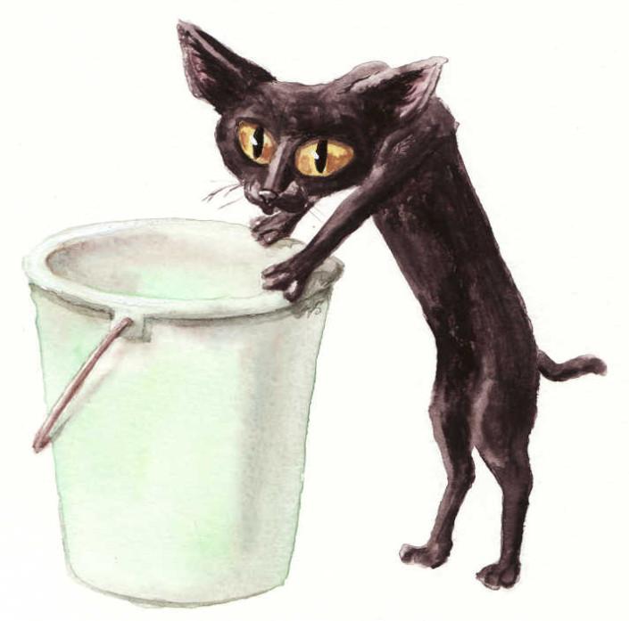 Politiquement croquette. Le chat Tekitoi