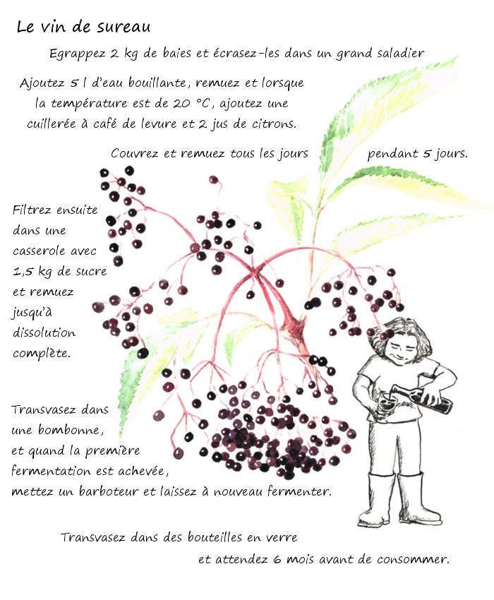 Le vin de sureau