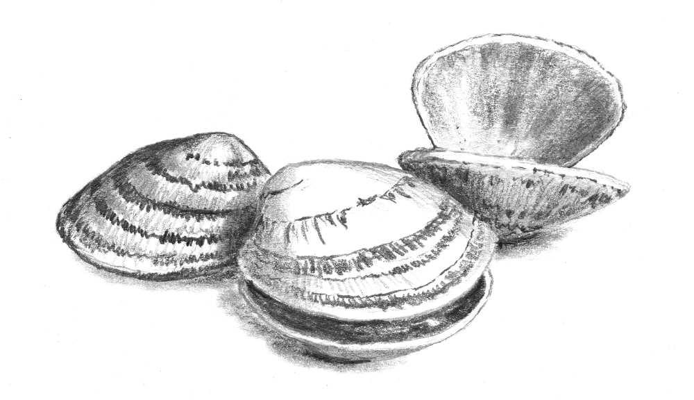 haricots blancs aux palourdes petit traité du haricot